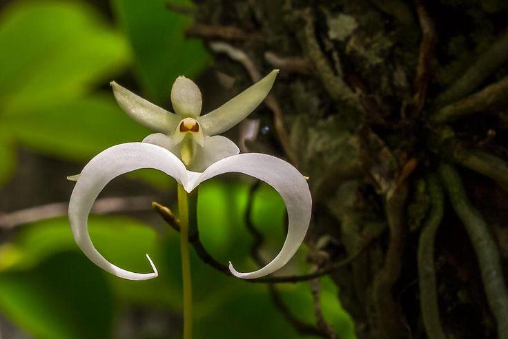 Самые редкие и необычные цветы в мире (20 фото)