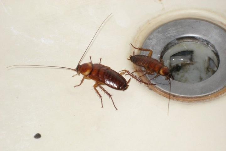 Неприятные соседи: 20 фото насекомых, притаившихся у вас дома