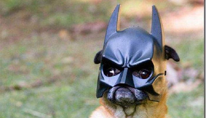 Когда хозяин идиот: 100 животных, которым не повезло с владельцами