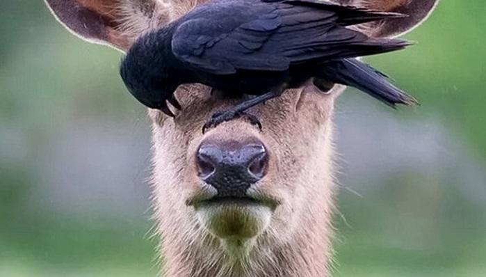 Самые забавные укусы животных, 20 фото