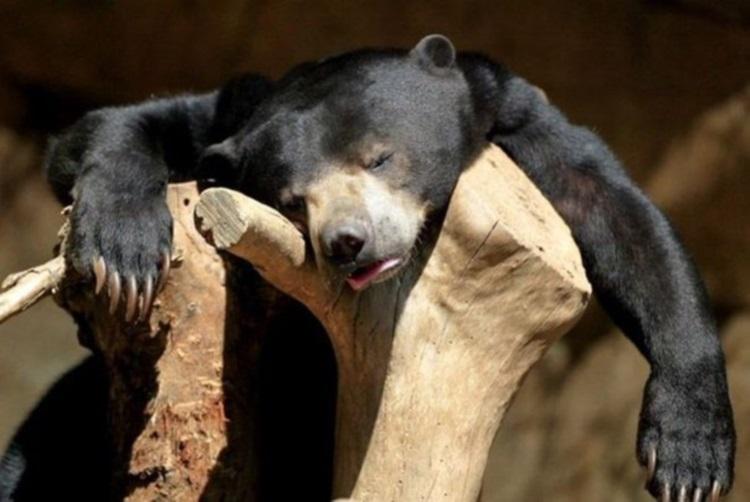 Фотографии животных, которые проиграли битву со сном, 70 фото