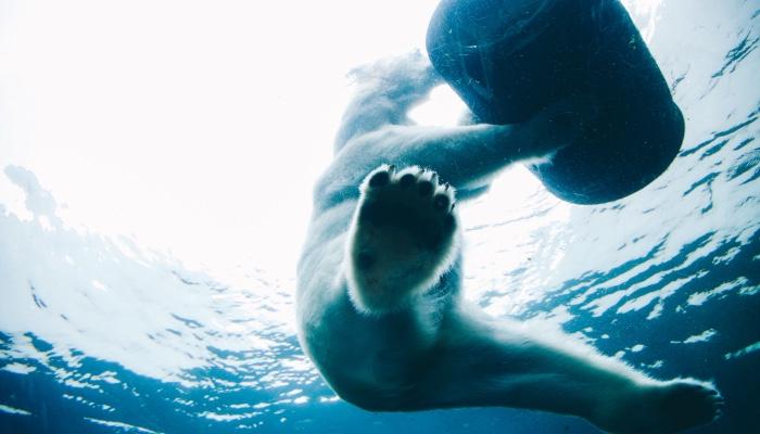 Невероятные снимки животных,100 фото