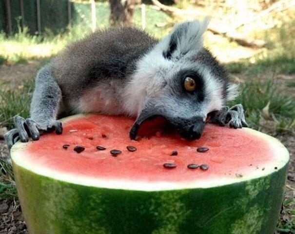 Самые очаровательные снимки животных, 50 фото (часть 2)