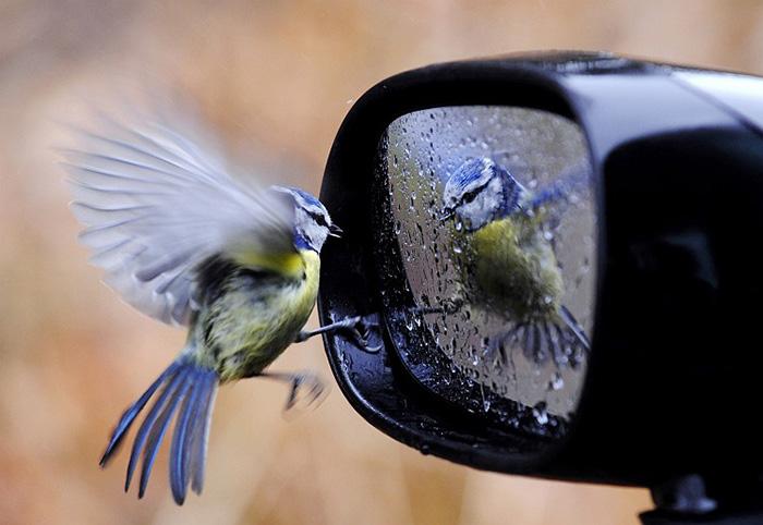 Самые очаровательные снимки животных, 50 фото (часть 1)