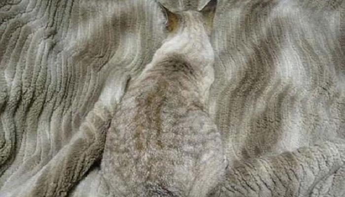 Кот как часть интерьера, 20 смешных фото