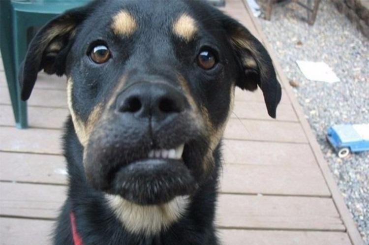 50 собак и котов, которых покусали пчелы
