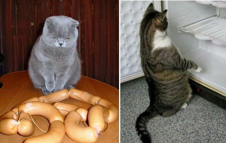 50 забавных котов Интернета