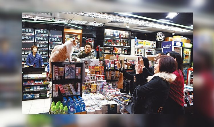 Деловые кошки: 35 усатых владельцев магазинов