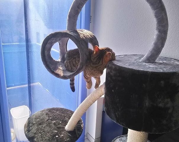 Забавные позы кошек, которые рассмешат вас: 40 прелестных фото