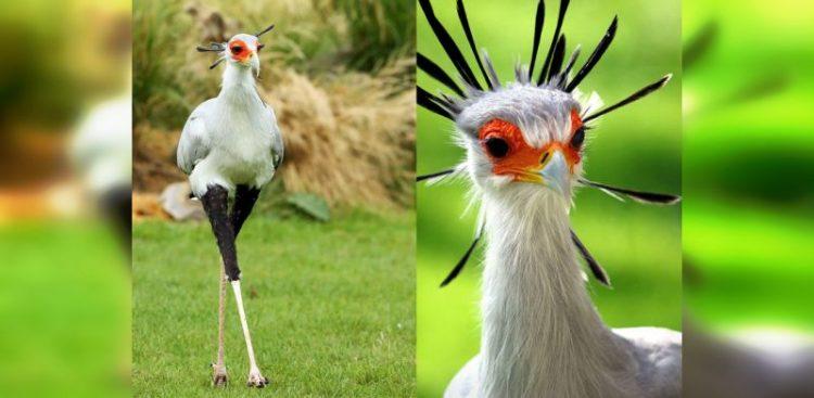 О них вы могли не знать: 30 удивительных и красивых птиц