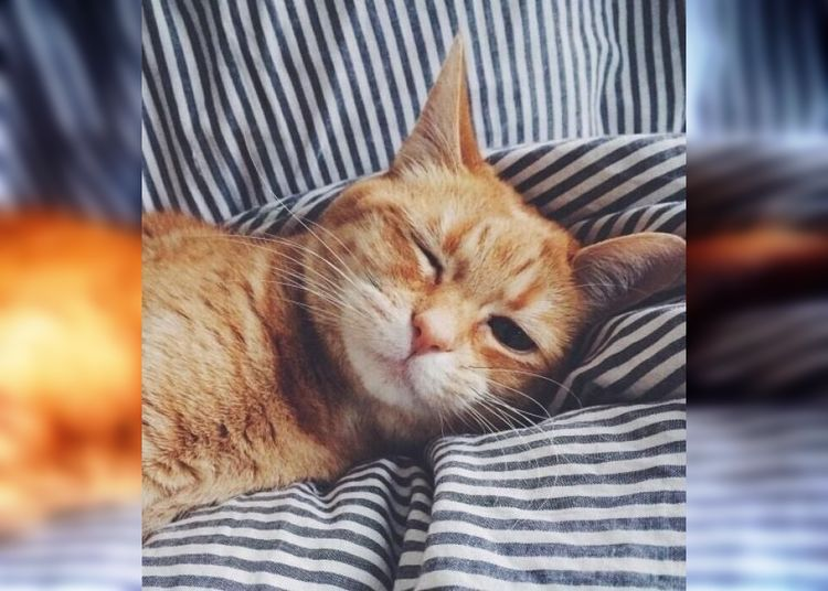 Сладкая месть: хозяева будят своих котов в отместку