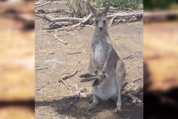 Неудачные снимки животных, которые вас точно развеселят