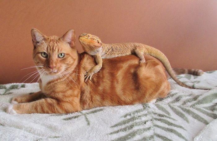 кошки и ящерицы